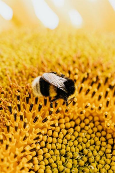 This spring, when you stop and smell the roses, 'Bee' prepared for insect stings