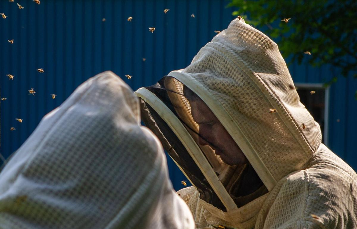 Beekeepers turn hobby into a honey-maker