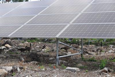 Saranac Lake solar project to be running by November