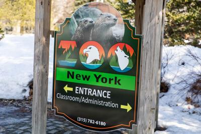 Zoo New York pursues donations for wellness fund
