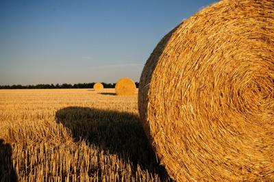 Hay and straw serve different purposes