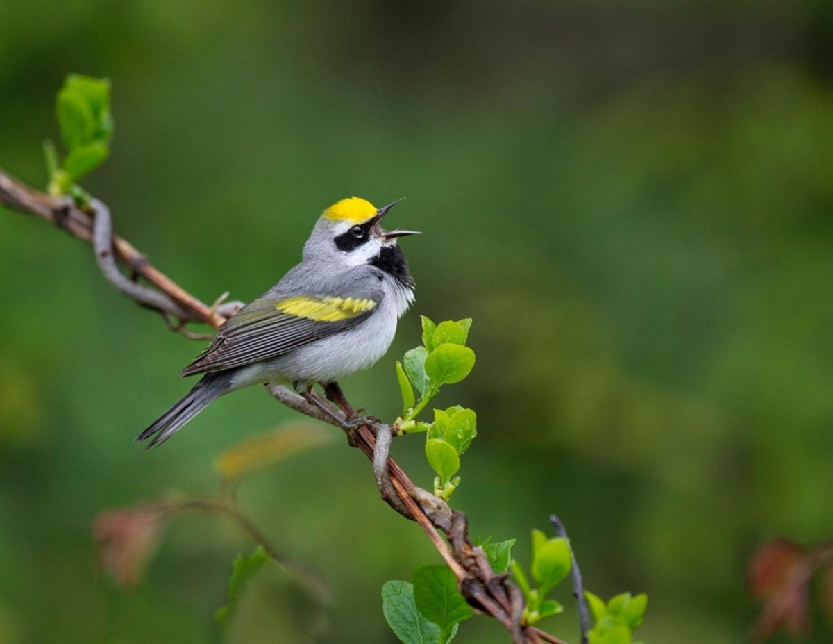1000 Islands Land Trust hosting birding event