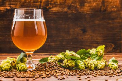 New hops breeding program will grow, develop signature NY varieties