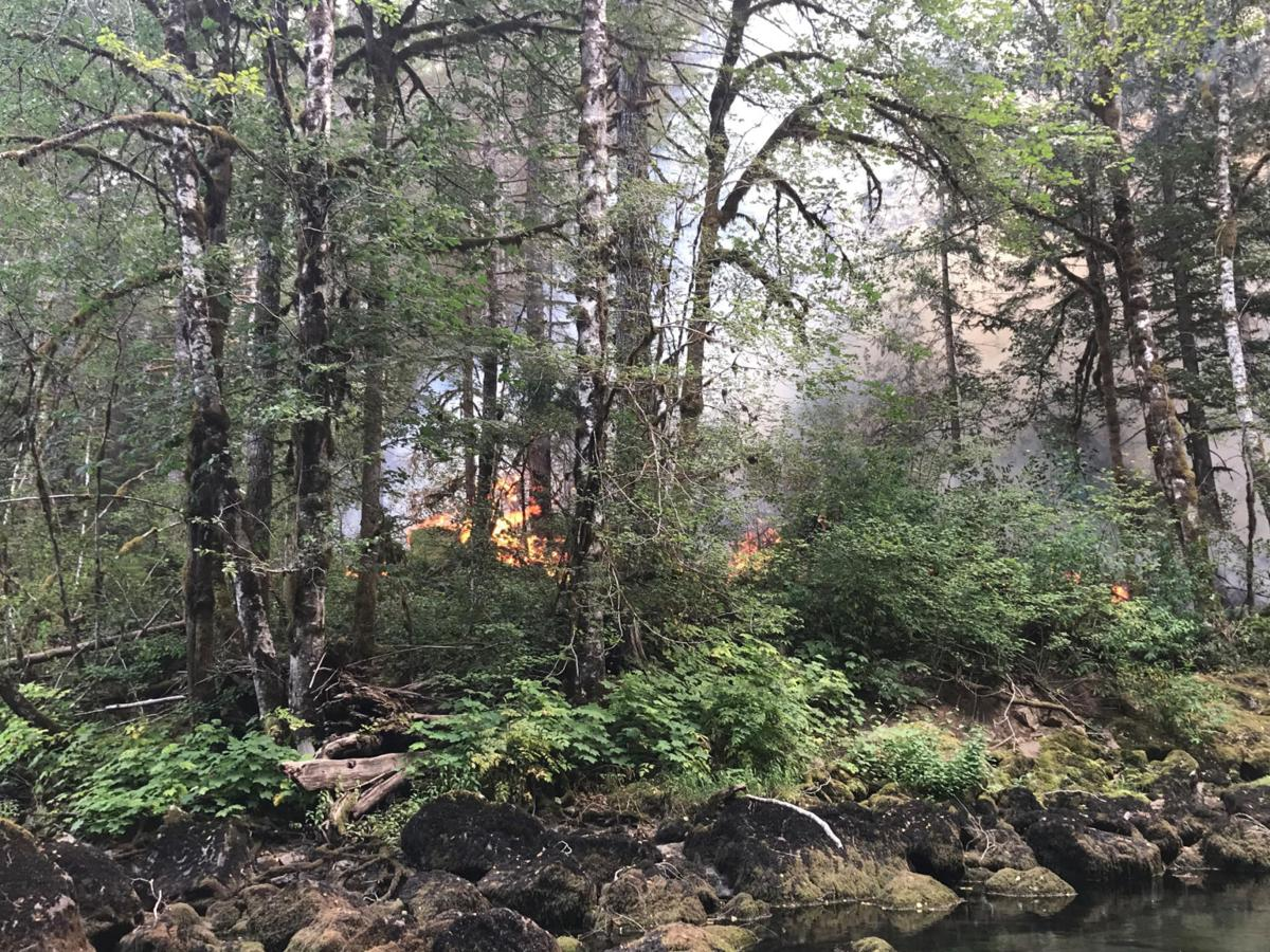 Tree thieves started fire that ravaged 3,300 acres