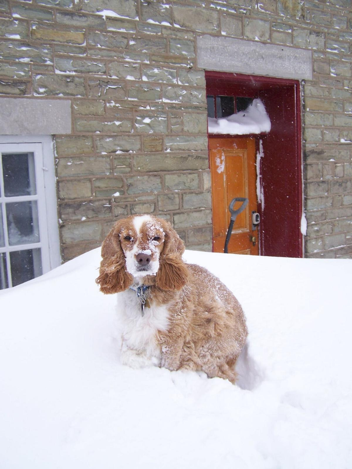 Beloved Fort Ontario canine mascot dies at age 17