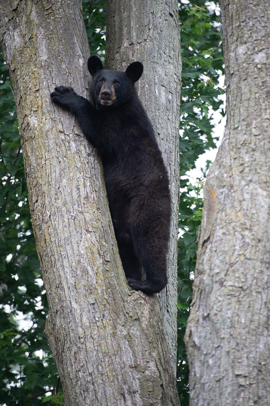 0625_wds_kie bear 2.jpg