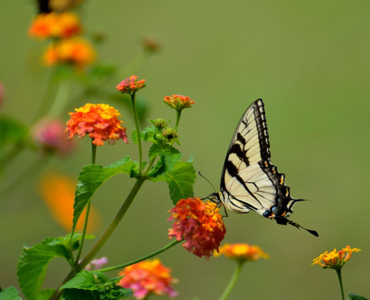 Quarantine activity: Plant a pollinator garden