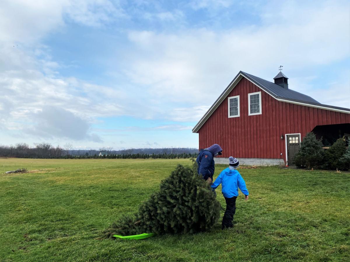 Families pick festive favorites at Canton tree farm