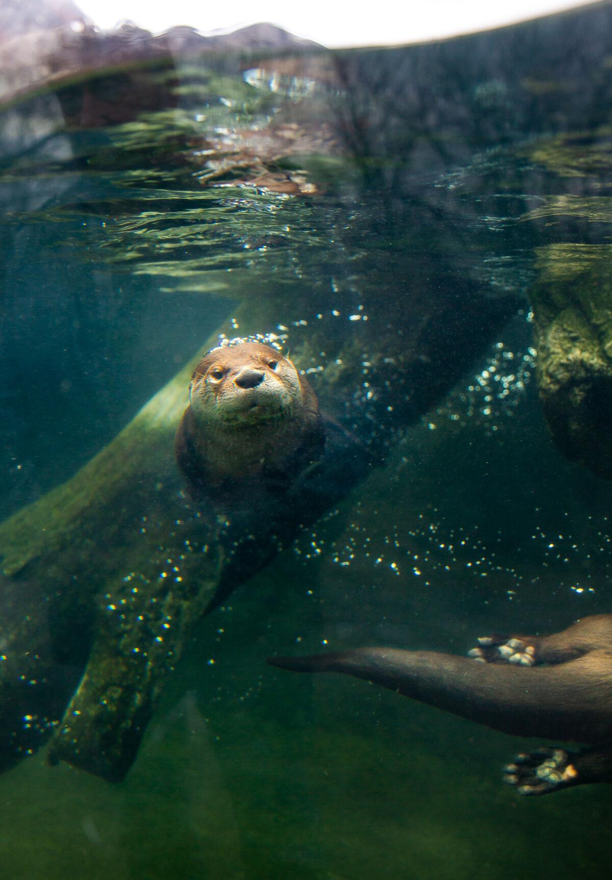 Zoo New York kicks off 100th year on Saturday
