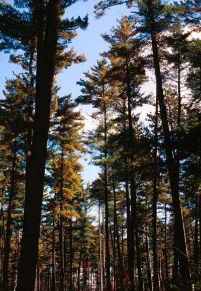 Land Trust hosts hiking, biking, paddling excursions