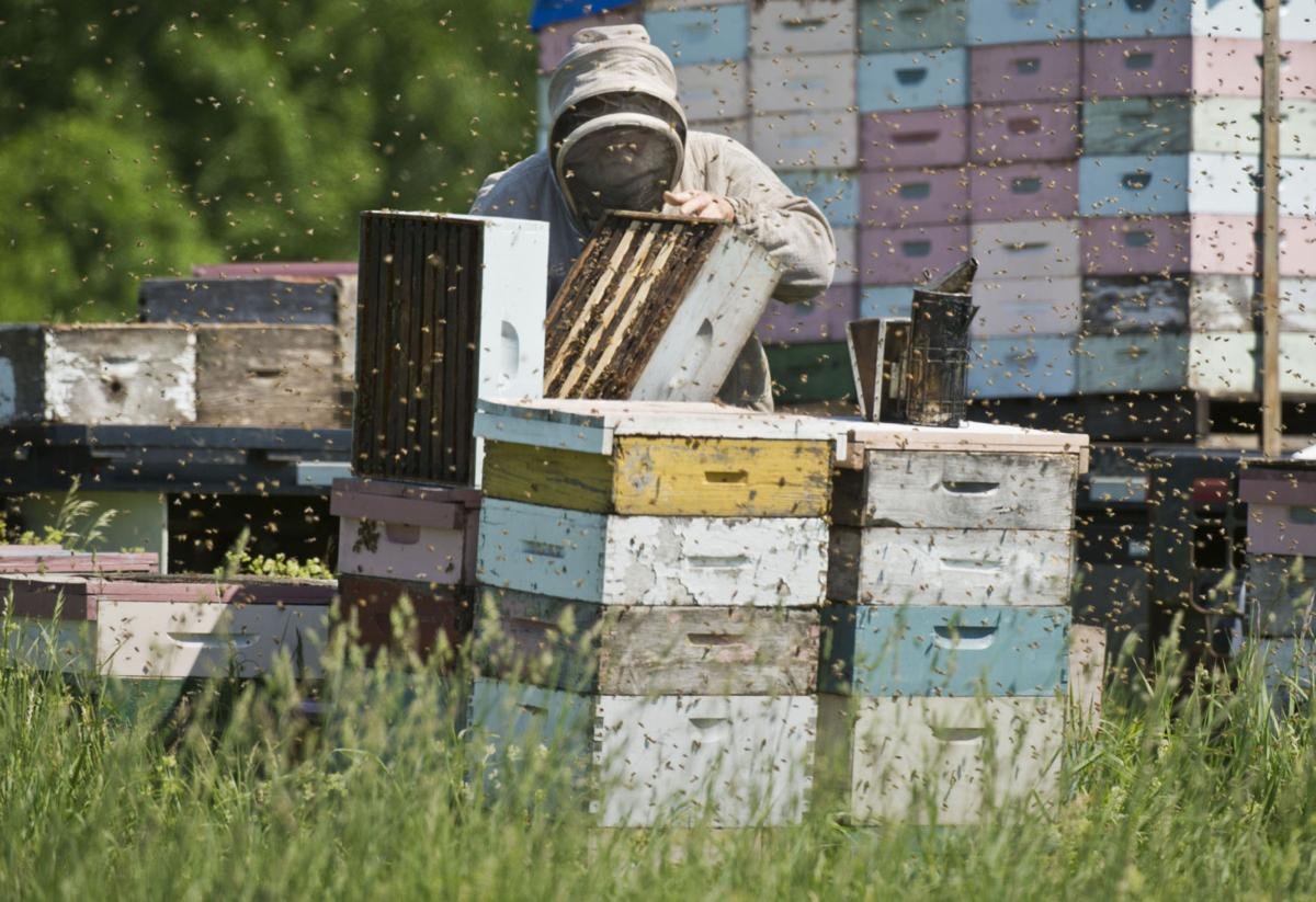 Bee data collection urged
