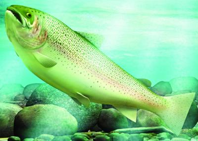 Ways to help trout, salmon avoid heat stress in summer