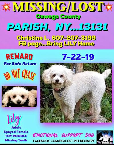 Two-year search for lost poodle goes on