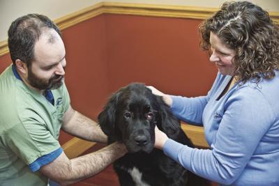 NNYM_wds_Canton Animal Clinic_cl52.jpg-web