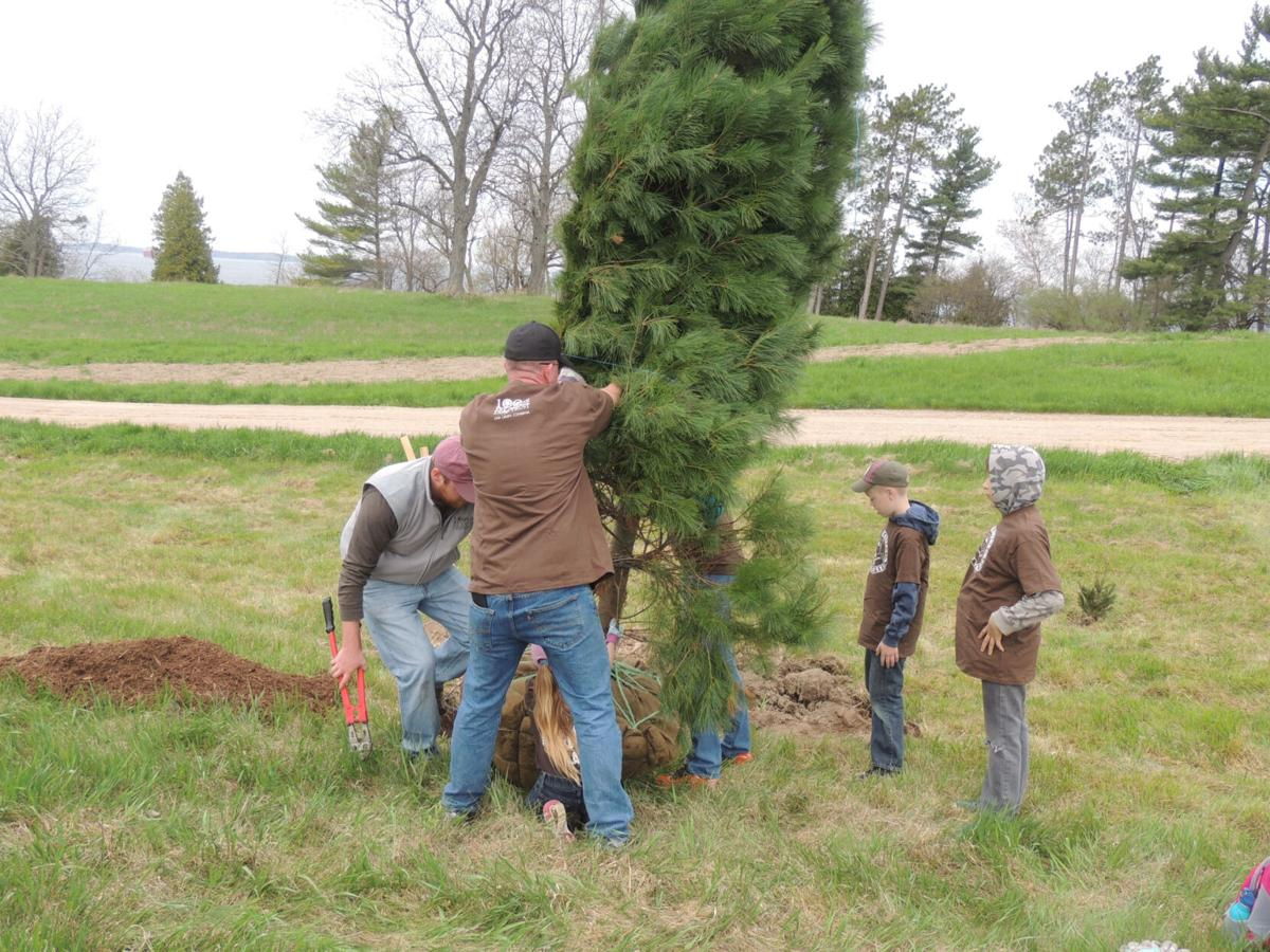 Arbor Day saplings offered