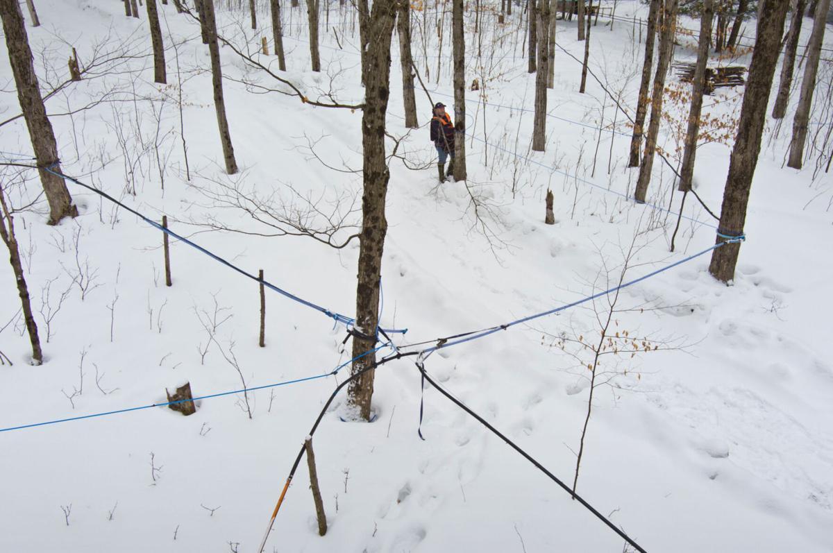 Prepping for maple season