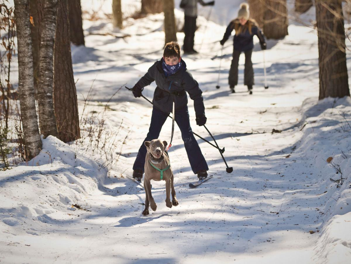 0220_wds_Dog Ski_cl.jpg