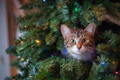 Tips to keep kids safe around holiday decorations