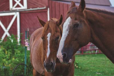 Oswego County 4-H Hippology and Horse Bowl