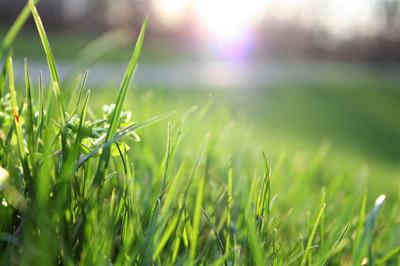 Spring lawn fertilizing means extra mowing