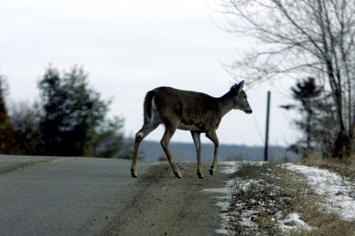Caution: Fall is deer mating season Prevent costly, scary car-animal collisions this season