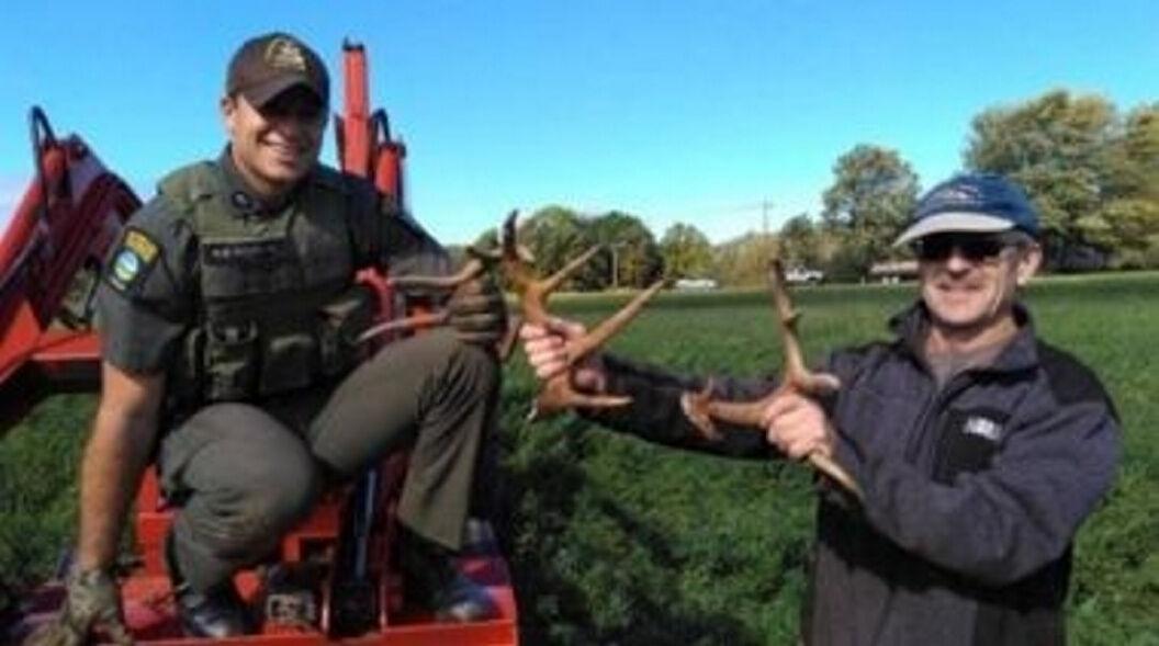 Deer lose antlers but gain freedom