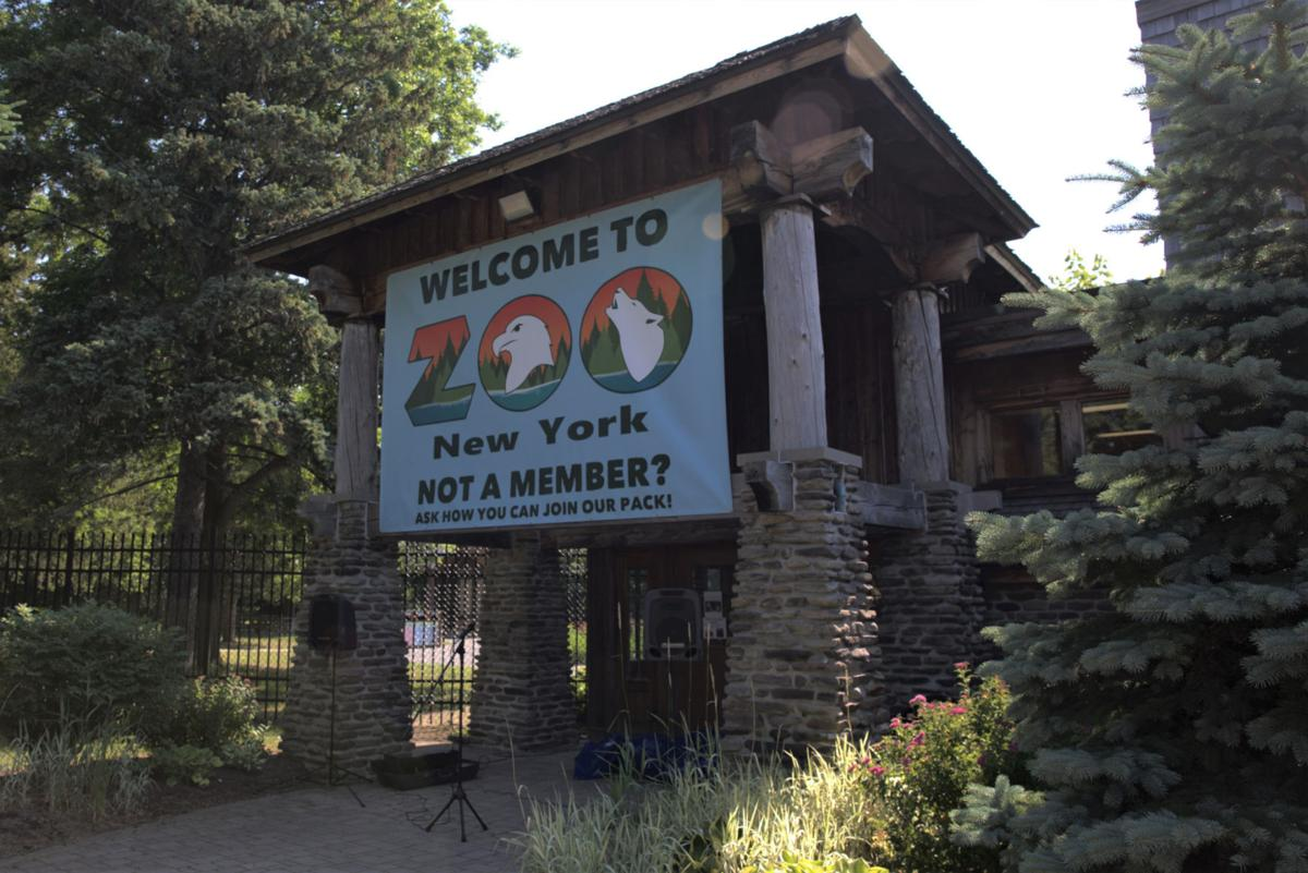 Zoo New York will debut new home for barn owl