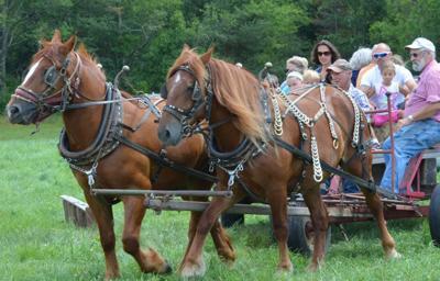 Zwanzigstein Fest returns to Mennonite Heritage Farm