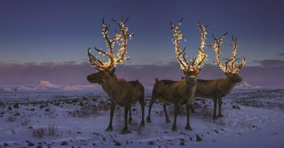 Deadline for Operation Reindeer is Nov. 20