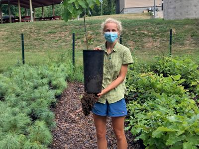 Rice Creek, Canal Forest Restoration Project offering trees to public; seeking help collecting seeds