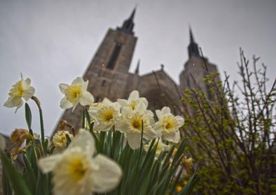 Symbol of spring's new life