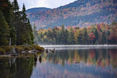 Adirondack forest being altered