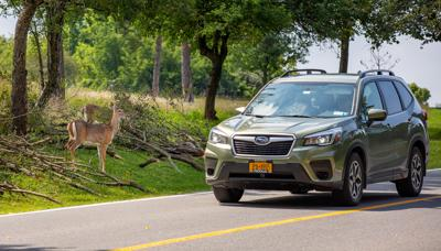 Car crashes with deer increase after time change
