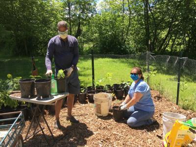 Rice Creek to host Arbor Day webinar