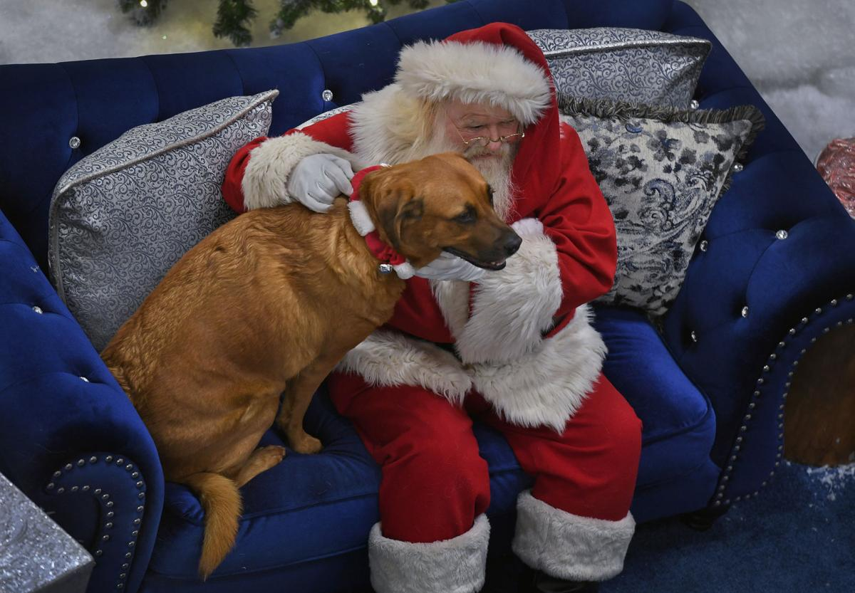 'Have you been a very good boy?' Santa asks dogs, cats, parrots and pythons