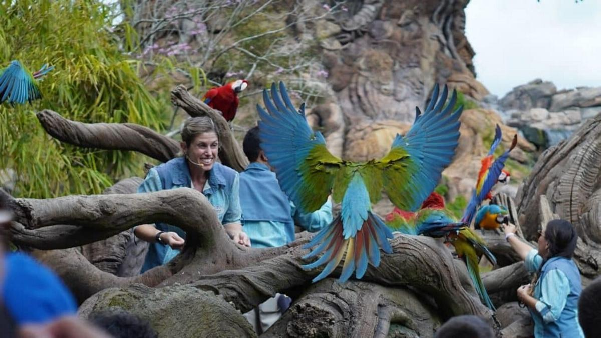 Get a look inside ANIMAL KINGDOM
