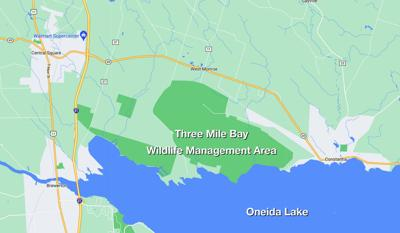 DEC lays out its 10-year plan for the Three Mile Bay Wildlife Management Area