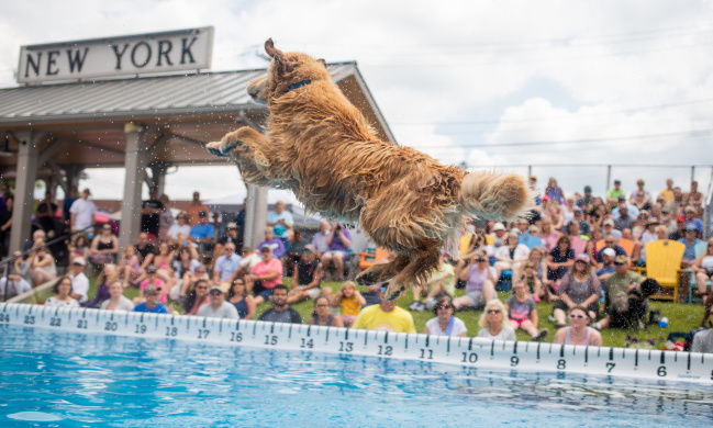 Dogs soar and score at Seaway Splash