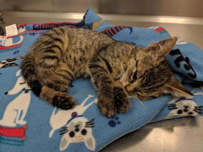 N.Y. bans cat declawing