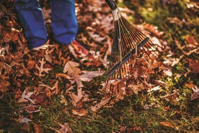 Town of Constantia and village of Cleveland residents leaf pick up program