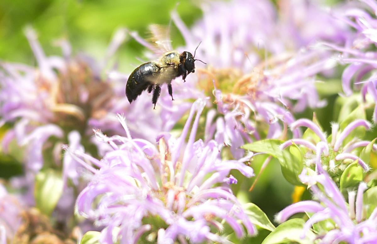 N.Y. debates pesticide ban to protect bees