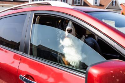 New law allows first responders to save pets from cars