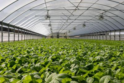 Massena mulls code change to add greenhouses