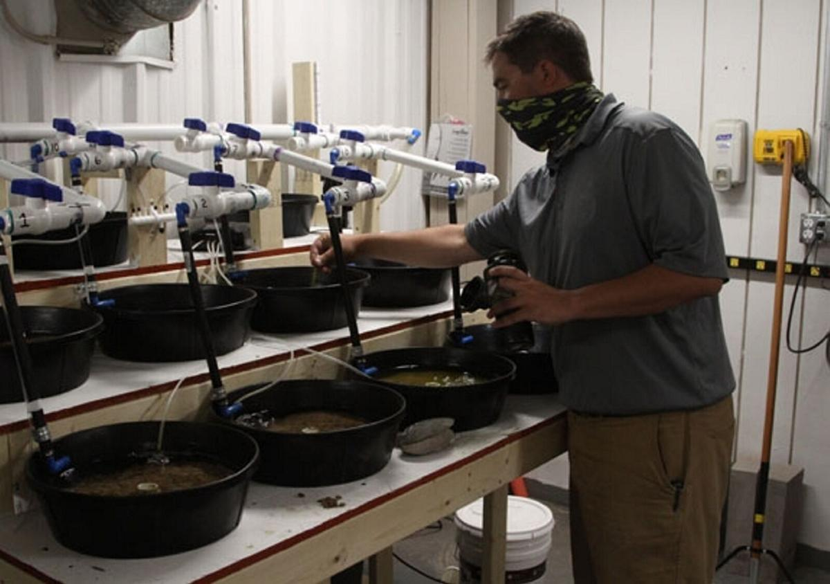 Research team seeks to save mussels