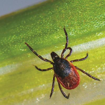 Local residents encouraged to participate in Lyme disease awareness study