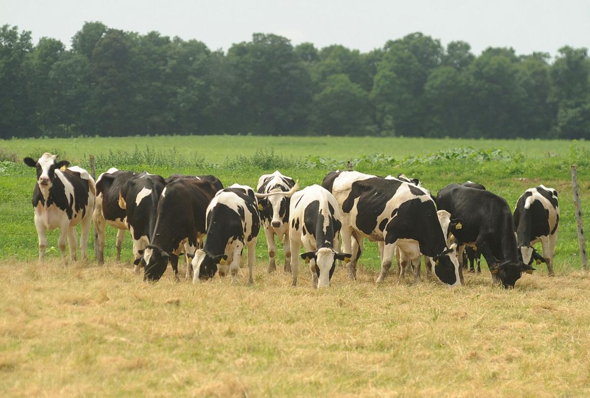 Survey finds 'no farm untouched' by pandemic