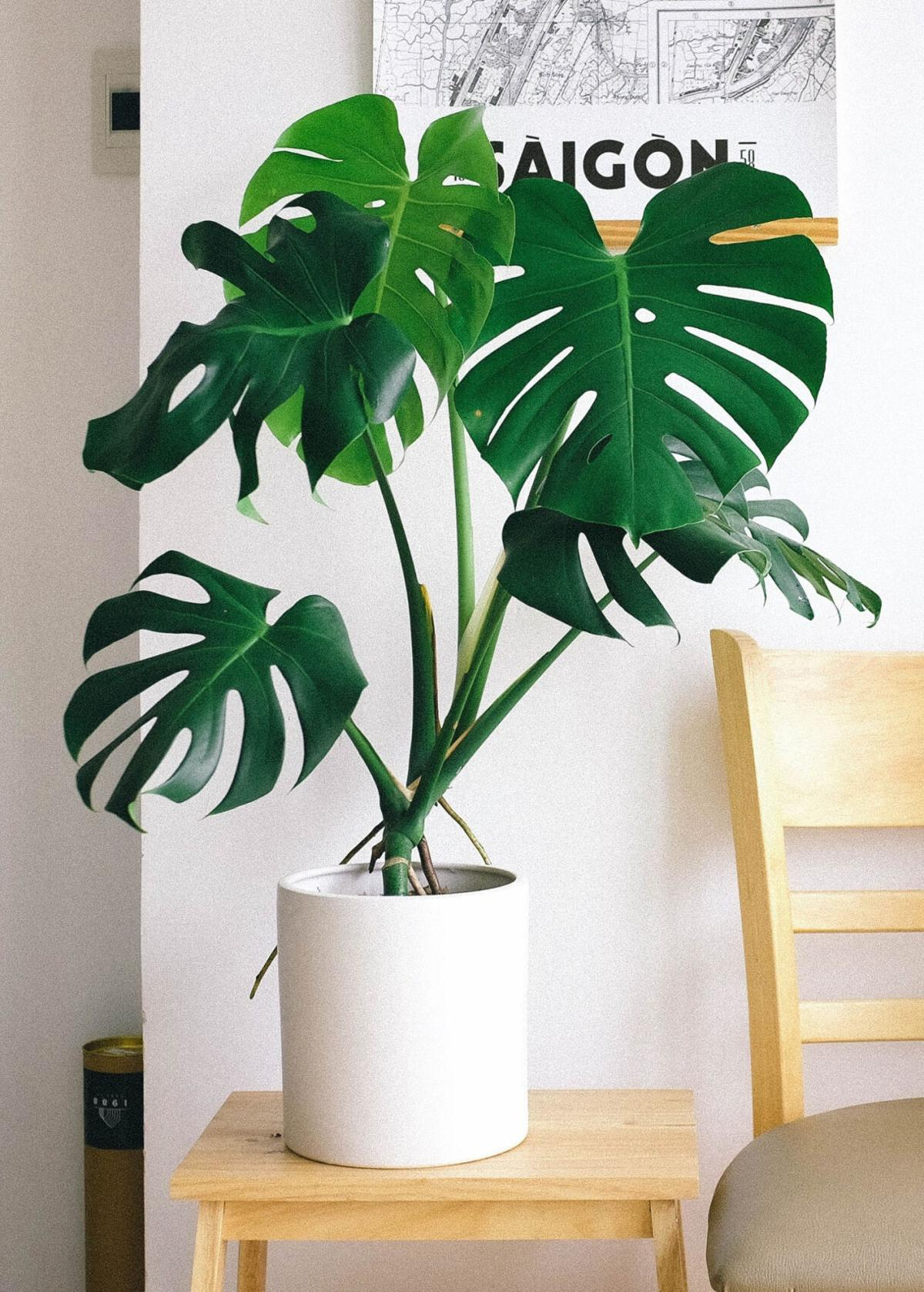 10 houseplants that will thrive in your bathroom
