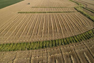 Study: Big farms received bulk of trade aid