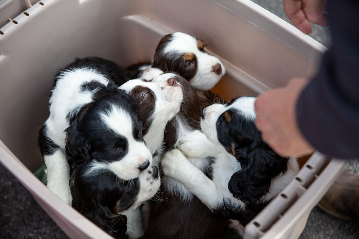 Veterinary offices face special challenges