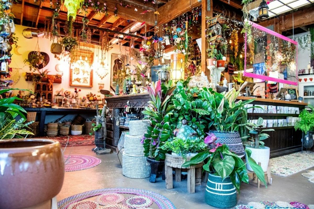 How a plant shop in Burbank became a refuge for the pandemic-weary